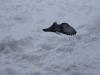 Topi con le ali nella neve